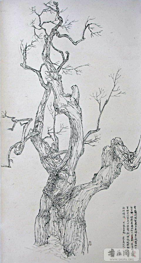 梨树简笔画图片大全