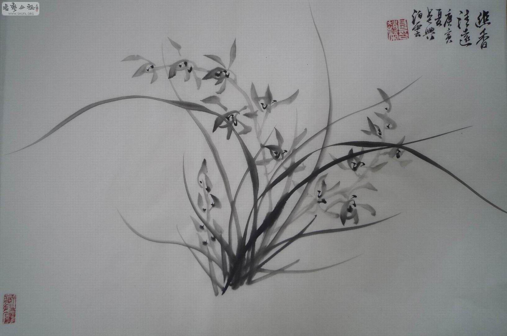 铅笔画手绘兰花30x80