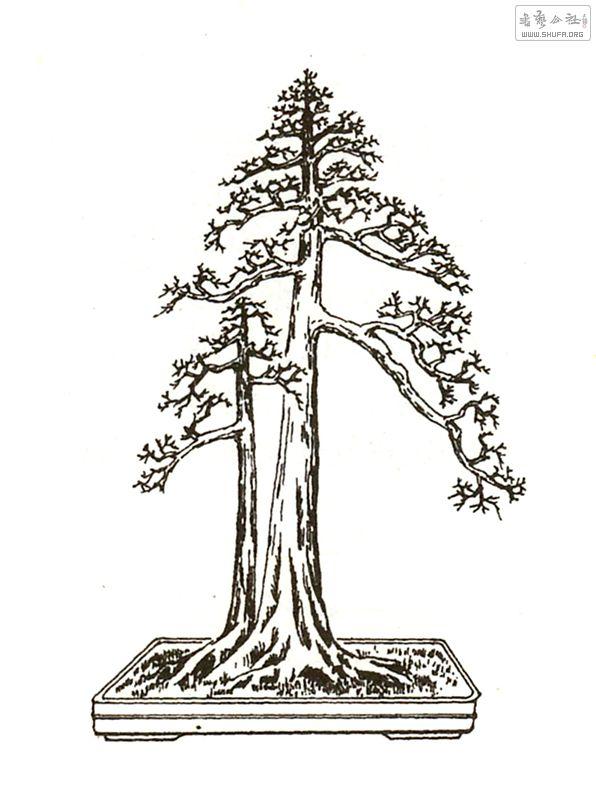 盆景 盆栽 手绘
