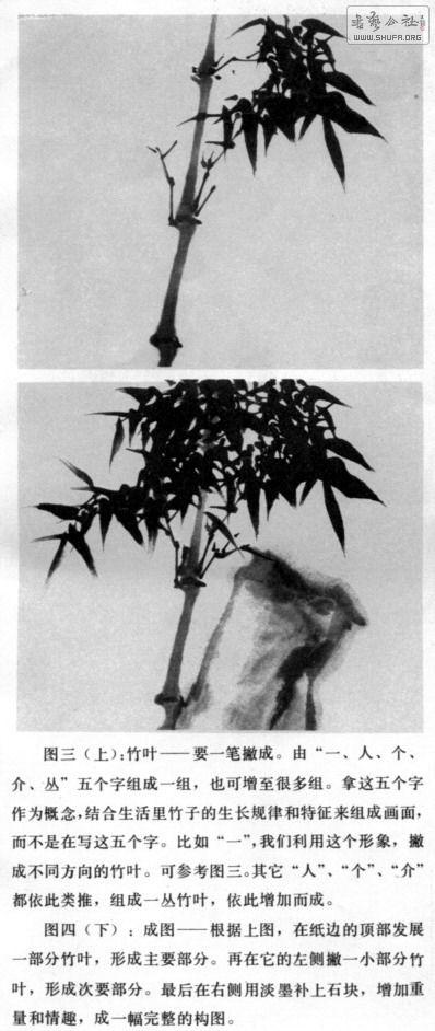 中国书画函授现代远程教育中心:竹子的画法 - 【初学